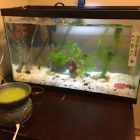 8-10 Gallon Tank with heater, filter and air bubbler