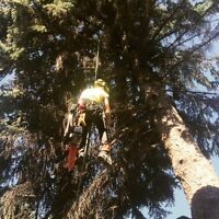 Tree Pruning and Removals in Canmore