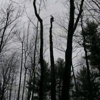 Élagage, émondage, abattage d'arbre