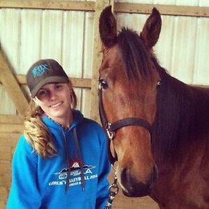 Beautiful 5yr Old Quarter Horse Gelding For Sale