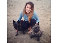 Dog Walking and Pet Sitting Service