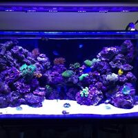 90 gallon custom starphire fresh/saltwater fish aquarium