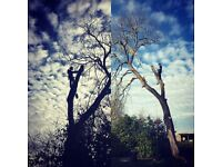 Black Dog Tree Services-Storm Damage Trees made safe/ cleared.