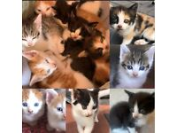 6 Beautiful Kittens for Sale