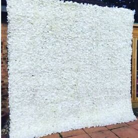 Beautiful flower wall/back drop...ivory hydrangea.....with or without lights! * H I R E *