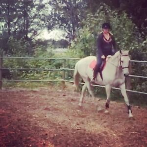 Experienced mare for lease