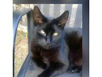 Missing male black cat white fluff crutch end