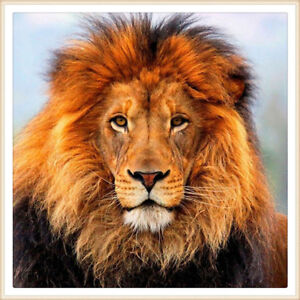 AfricanLionSafariTickets for 2-4 people, from $163