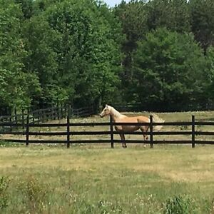 Free Lease of 2 Horses, On Property  – North of Penetang