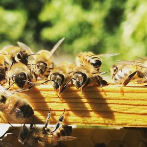 FREE honey for land space!