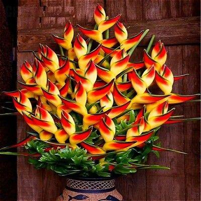 Orange Strelitzia Reginae Flower Seeds Bird Of Paradise, Best Seller Flower 100