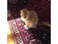 Experienced and dedicated cat-sitter, Chorlton, Whalley Range, Trafford areas