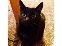 BEAUTIFUL SHORT HAIR BLACK CAT 18months OLD, SHY AT FIRST BUT LOVES CUDDLES. FREE TO RIGHT PERSON.