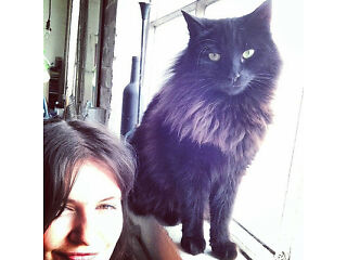Missing black half persian cat