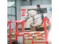 Free lance rider / instructor