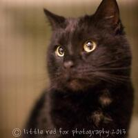 Black is Back! $50 Black Cats for the month of September!