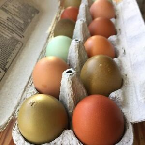Rainbow Hatching Eggs for Sale