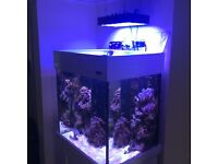 Aqua One fish tank; complete with fish, rock and coral
