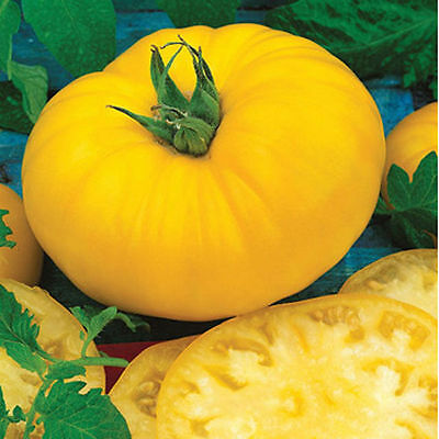 Sunny Boy Tomato LOW ACID 10 Seeds OVER 200 HEIRLOOM TOMATOES IN OUR STORE! (Sunnies Store)