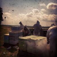 Beekeepers Wanted  for The 2018 Season