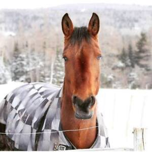 Considering my horse for part. lease