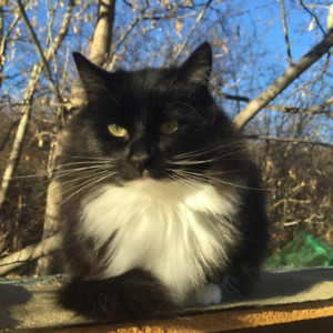 Lost - Black and White Cat