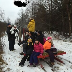 Sleigh rides and group parties Kingston Kingston Area image 3
