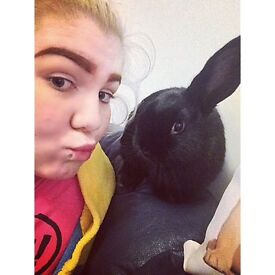 Missing Mini Lop Black Female Rabbit!!