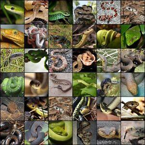 Ill take your unwanted reptiles : Reptile Rescue in Hamilton