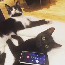 Two cats need a safe living home