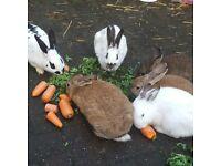 Lovey bunny rabbits