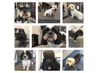 £5 OFF first groom