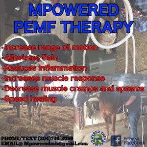 Keep your horse happy and sound