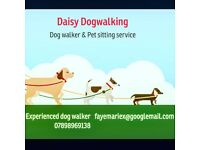 Daisy dog walking and pet sitting services