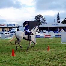 Show jumper for sale. Caloundra Area Preview