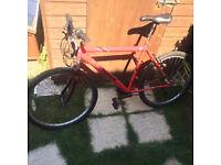 red men's bike
