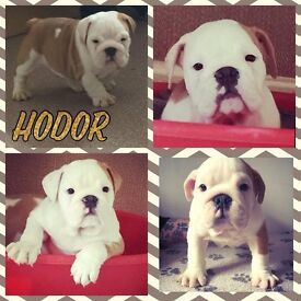 One Puppy Left ****REDUCED****