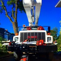 TREE CUTTING - ABATTAGE D ARBRES