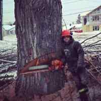 $$ 50% OFF PROFESSIONAL TREE REMOVAL SERVICE...CALL 705 255 7047