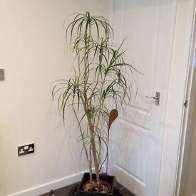 Plant plus solid wooden planter