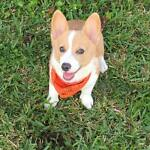 GRETCHENS FETCHEN GOOD DOG TREATS