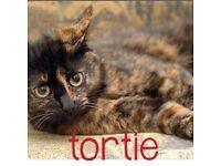 Lovely kittens tortoiseshell it's beautiful lovely kittens