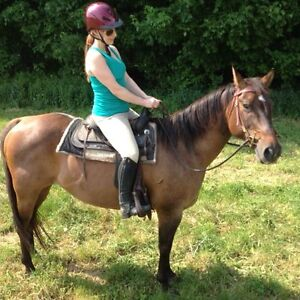 BEAUTIFUL REGISTERED AQHA MARE BARREL PROSPECT