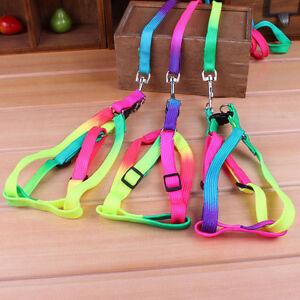 laisse-pour-chien-multicolor-laiise-harnais-laisse-harnais-promenade