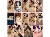 Male kitten 🐱💖