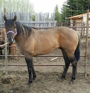 Regular Monthly Horse Sale - May 27th - Tofield