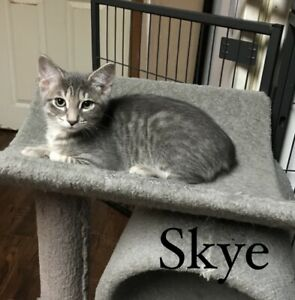 Skye (Infinity Haven Cat and Kitten Rescue)