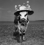 CowsHat