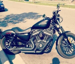 For sale : 2013 Harley iron 883