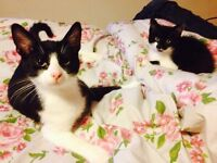 Looking for a 2/3 bedroom house or flat to rent - Must accept two lovely cats.